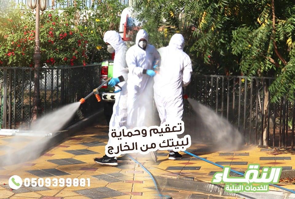 مكافحة حشرات راس الخيمة , شركات مبيدات راس الخيمة , النقاء لمكافحة الحشرات 5308-cached.jpg